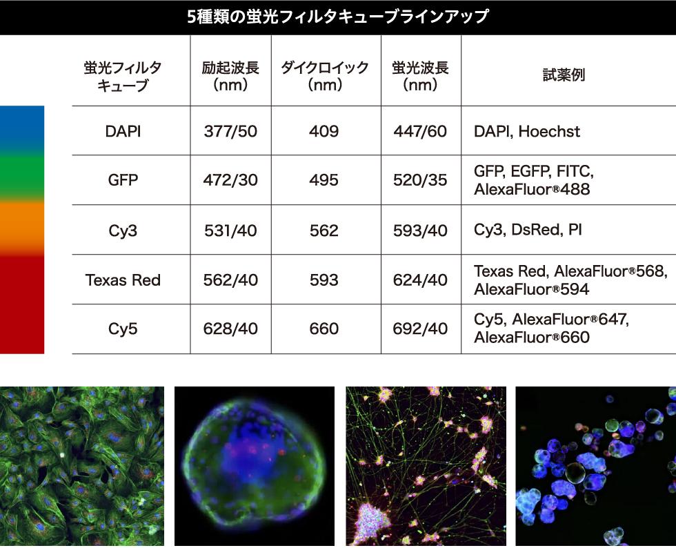 5種類の蛍光フィルタキューブラインアップ