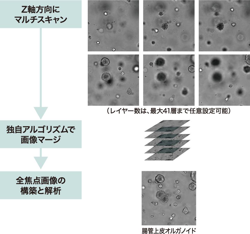 3次元培養細胞対応