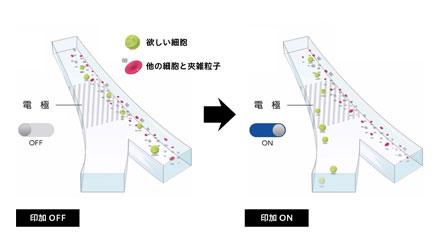細胞分離分析装置